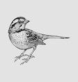 Little Sparrow vector image vector image