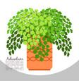 adiantum indoor plant in pot banner vector image vector image