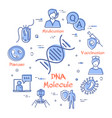 concept bacteria and viruses - dna vector image vector image