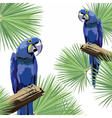Exotic tropical card with parrot birds vector image vector image