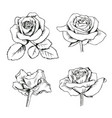 set collection of enfraved roses with leaves vector image