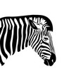 zebra head on a white background wild animals vector image