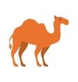 animal figure of camel cartoon vector image
