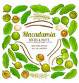 macadamia plant elements isolated vector image vector image
