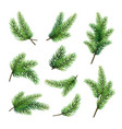 set of fir branches isolated on white background vector image vector image
