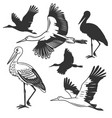 set storks in different poses vector image vector image