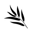 willow leaf vector image vector image