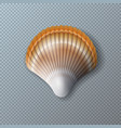 with beautiful shell isolated vector image vector image