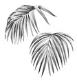 hand drawn palm leaves isolated on white vector image
