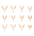 wheat ears icons set vector image vector image