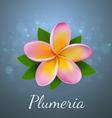 plumeria vector image