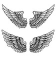 set of the eagle wings isolated on white vector image