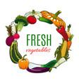 vegetables banner pumpkin tomato corn vector image vector image