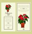anthurium flower in pot banners vector image vector image