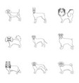 dachshund laika poodle and other web icon in vector image vector image