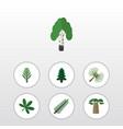 flat icon bio set of baobab jungle spruce leaves vector image vector image