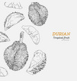 set of durian sketch vector image vector image
