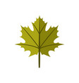 simple maple green autumn leaf symbol graphic vector image