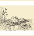water lily on the lake hand drawing vector image