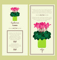 cyclamen flower in pot banners vector image