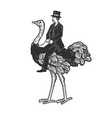 gentleman riding an ostrich sketch vector image vector image