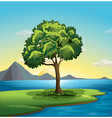A tree near the ocean vector image vector image