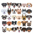 many laughing and pretty dogs vector image vector image