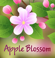 Blossoming apple tree branch with pink flowers vector image vector image