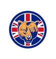 british bear union jack flag icon vector image vector image