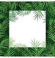 border frame tropical palm leaf vector image vector image