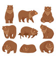 cartoon brown bear grizzly bears wild nature vector image vector image