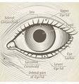 human eye etching with captions Cornea vector image