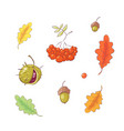 set in style hand drawing autumn and leaves vector image vector image