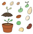 set of plant seed vector image