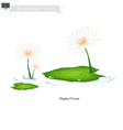 Shapla or Water Lily The National Flower of Nepal vector image vector image