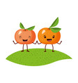 white background with realistic pair of tangerine vector image vector image