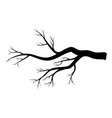 bare branch winter design isolated on white vector image