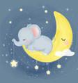 cute elephant sleeping vector image