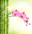 Orchid pink flowers with bamboo and sunlight on vector image vector image