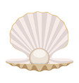 pearl in a shell vector image vector image