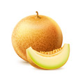 realistic round fresh melon with slice vector image