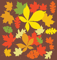 autumn leaves color vector image vector image