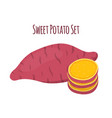 Batat sweet potato and slices organic vegetable vector image