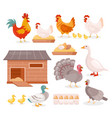 chicken in farm barn henhouse isolated set hen vector image