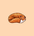 fox is sleeping animal with fluffy tail vector image vector image