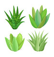 isolated succulents on white background vector image vector image