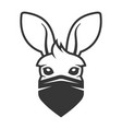 kangaroo head with anti smoke mask icon logo on vector image vector image