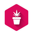 white medical marijuana or cannabis plant in pot vector image vector image