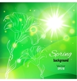 Abstract background for spring with lily flower vector image