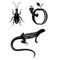 black design elements - beetle worm lizard vector image vector image